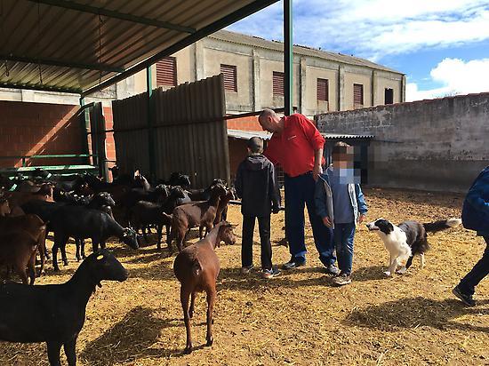 visiting the goat farm