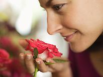 La rosa es la estrella del perfume