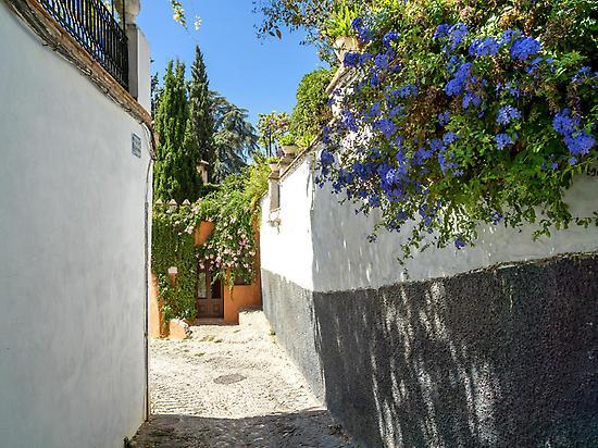 Aromatic plants, Moorish neighborhood
