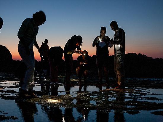 NIGHT TIDEPOOL SAFARI PICTURES 2020 (2)