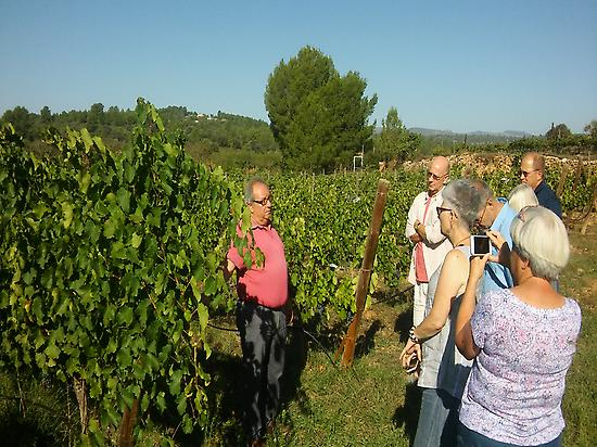 visiting vineyards with the winemaker
