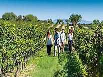 Visitaremos los viñedos desde dentro.