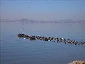 Birds in Mar Menor