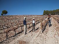 Matarromera vineyards