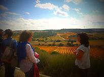 Vistas al paisaje y los viñedos