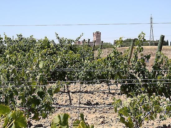 Discovering White Grape Varieties Garden