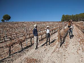 Discover how the vineyards works are