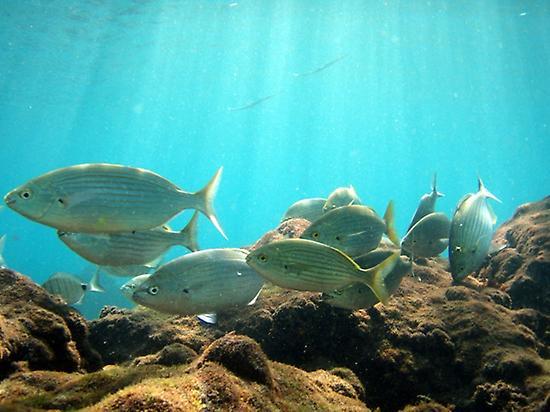 Schwarmweise lustige Fische