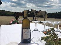 Quim Batlle winery