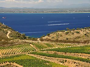 Espelt vineyards and sea