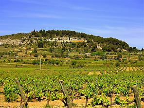 Vilafranca's vineyards