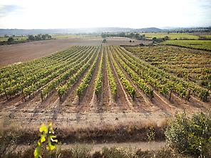 Empordalià vineyards