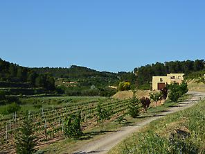 Bernaví winery