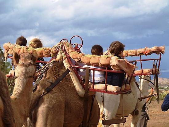 Niños a  camello