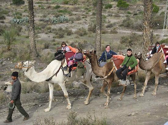 Excursiones con camellos para niños