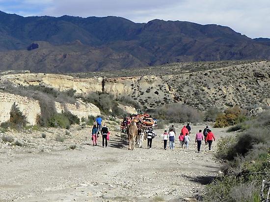 Excursiones con camellos en Almería