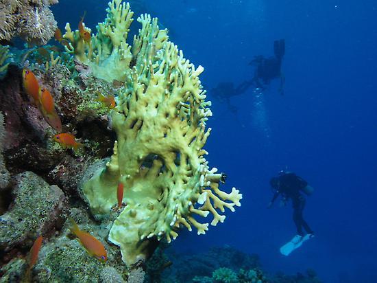 Iniciación al submarinismo en La Palma