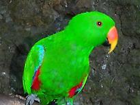 Visita el zoo de Breña