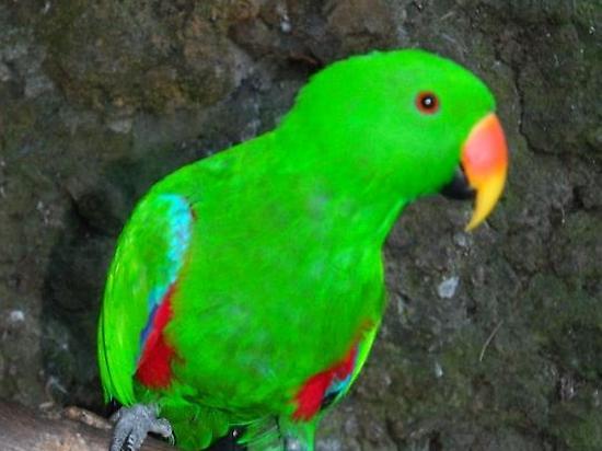 Visita el zoo de Breña Alta