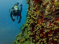 Diving Baptism in Puerto de Naos