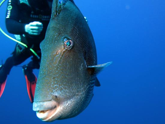 Descubre la fauna del Atlántico