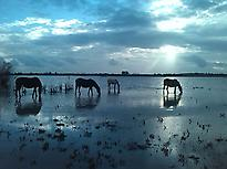 DOÑANA NATIONAL PARK