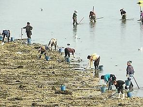Shellfish workshops in the beaches of th