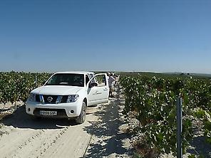 Roads between vineyards
