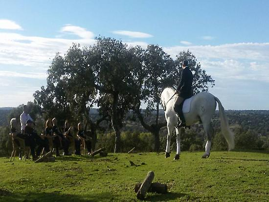 The art of dressage in nature