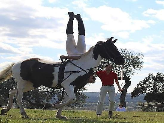 Acrobatic turnings in natural horsemansh