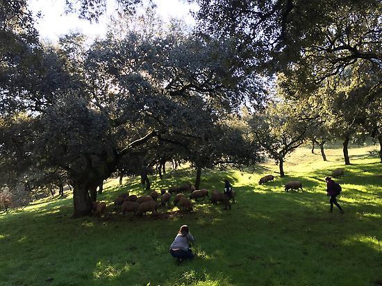 The Ham Safari. Dehesa of Extremadura