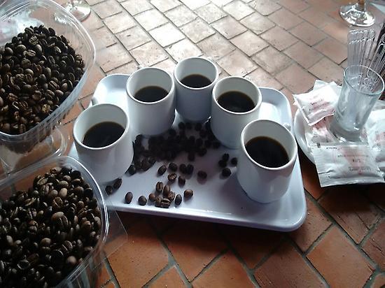 Cata de café arábica typica