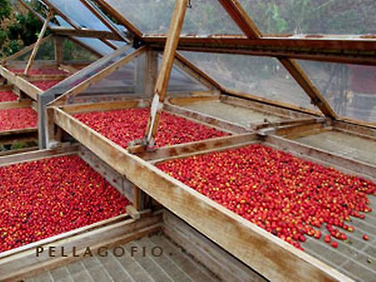 secaderos de granos de cafe