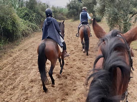 Horse ride through the Aljarafe