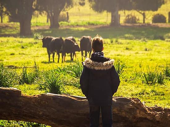 Visita ad un allevamento di Tori Bravi