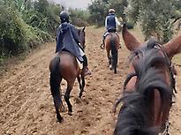Horse riding in Doñana