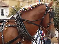 Horse carriage ride through Seville