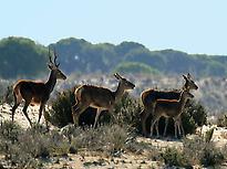 Ruta en 4×4 Zona Sur Doñana