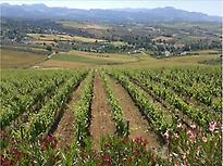 Our vinyards and wonderfull views.