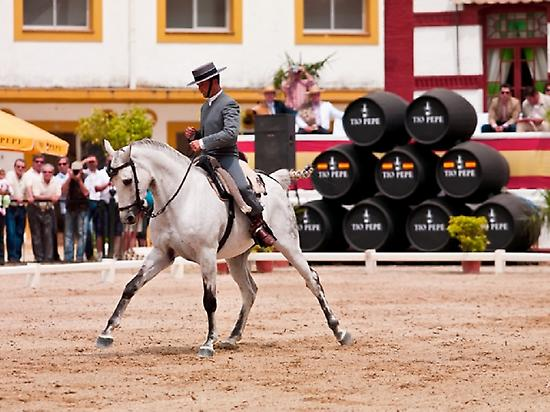 Authentic Andalusian Purebred horses