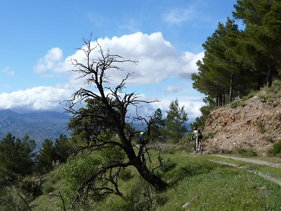 SIERRA DE LOS FILABRES MOUNTAINS