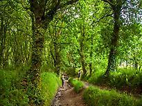 Bosque en el camino