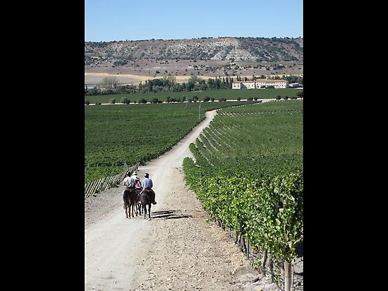 Riding through the vinyard
