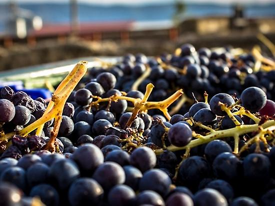 Visit Winery and wine tasting