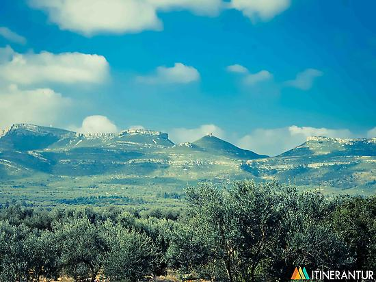 The millennial olive-trees route