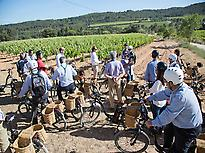 E-bike tour between the vineyards