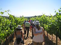 Segura Viudas vineyard tour