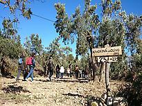 Visita a los olivos centenarios