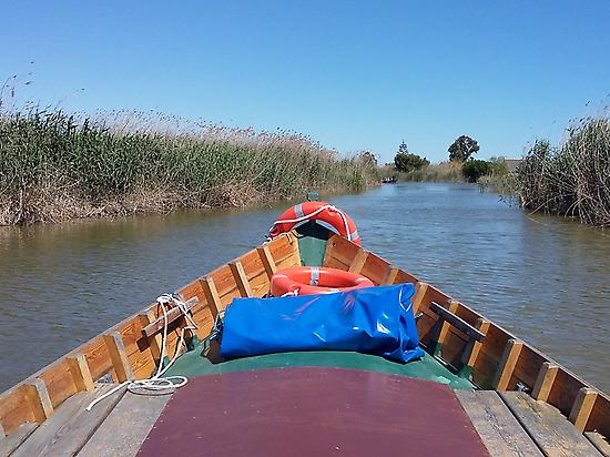 Boat ride on the Albufera
