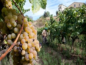 Tour vinicole à travers Alella